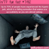 the hypnic jerk facts
