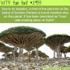 the island of socotra