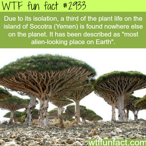 The island of socotra -  WTF fun facts