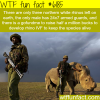 the last male northern white rhino in the world