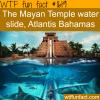 the mayan temble water slide in atalntis bahamas