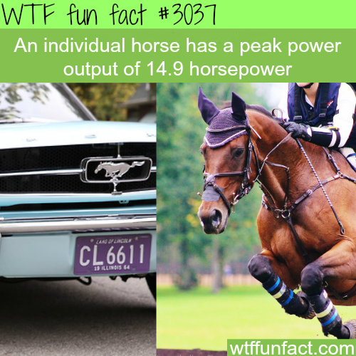 The meaning of horsepower -WTF fun facts