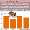 the mice infestation in the united kingdoms