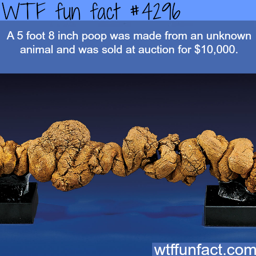 The most expensive piece of shit -  WTF fun facts