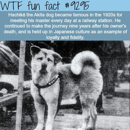 The most loyal dog - WTF fun fact