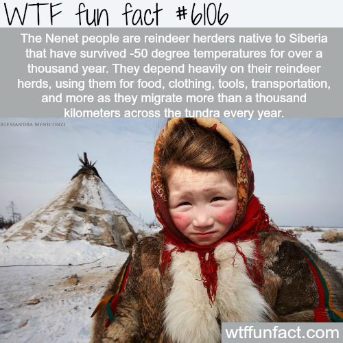 The Nenet people - WTF fun facts