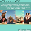 the news reporter in zootopia is different in each