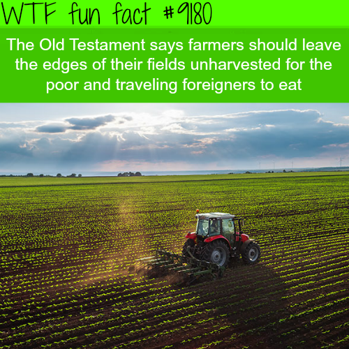 The Old Testament - WTF Fun Facts