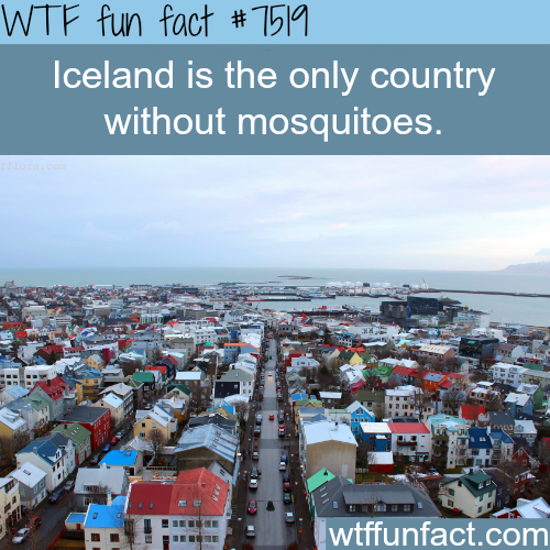 The only country in the world without mosquitoes - WTF FUN FACTS