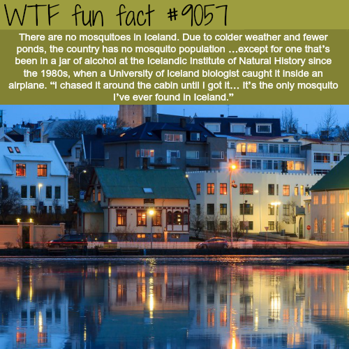 The only place with no mosquitoes - WTF fun facts