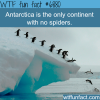 the only place with no spiders wtf fun fact