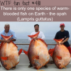 the only warm blooded fish wtf fun facts