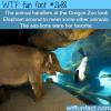 the oregon zoo elephant meets sea lions