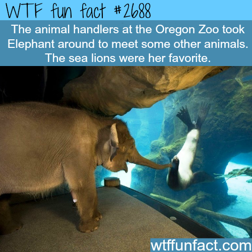 The Oregon Zoo