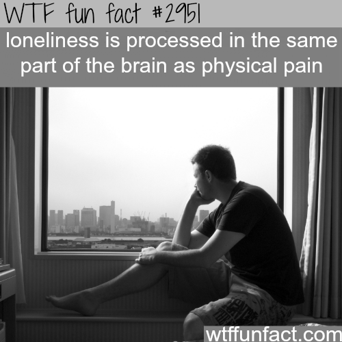 The pain of loneliness -WTF fun facts