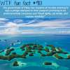 the palau government wtf fun fact