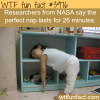 the perfect nap wtf fun facts