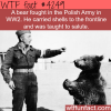 the polish army and their bear soldier