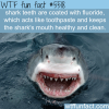 the reason sharks teeth are white and clean wtf