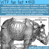 the rhinoceros party of canada wtf fun facts