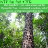 the sandbox tree wtf fun facts