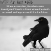 the smartest birds wtf fun facts