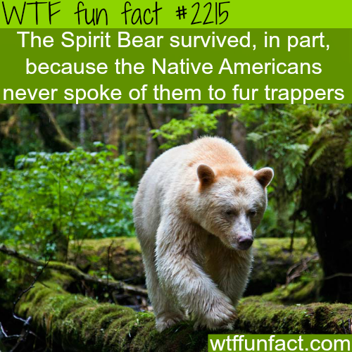 The spirit Bear - WTF fun facts