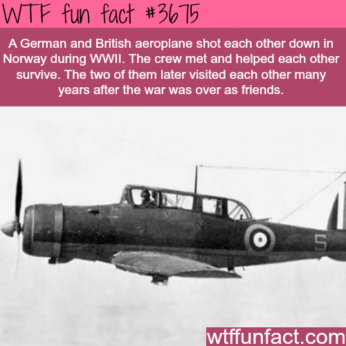 The story of two enemies who helped each other survive - WTF fun facts