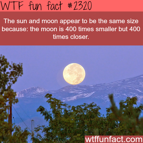 The sun and moon appear the same size - WTF fun facts