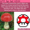 the super mario mushrooms amanita muscaria