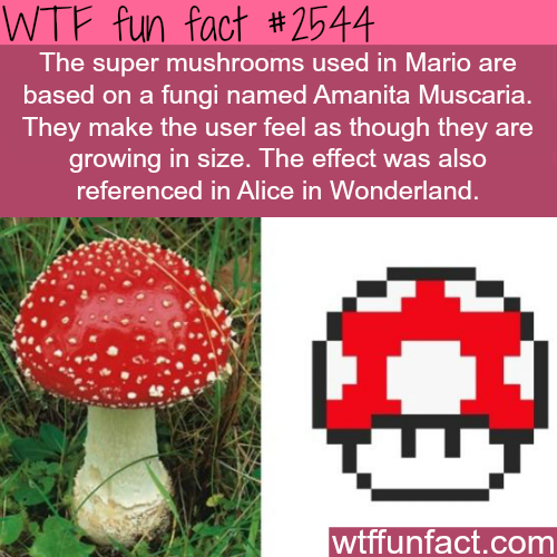 The super mario mushrooms: Amanita Muscaria - WTF fun facts