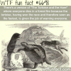 the tortoise and the hare wtf fun fact