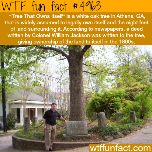 The Tree that Owns Itself - WTF fun facts