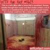 the vets office after a horse had a nosebleed