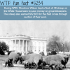 the white house used sheep to save money on
