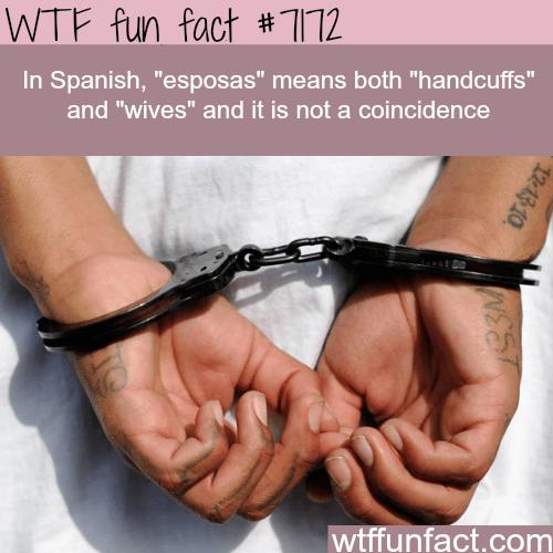 "The word ""esposas"" in Spanish - WTF Fun Fact"