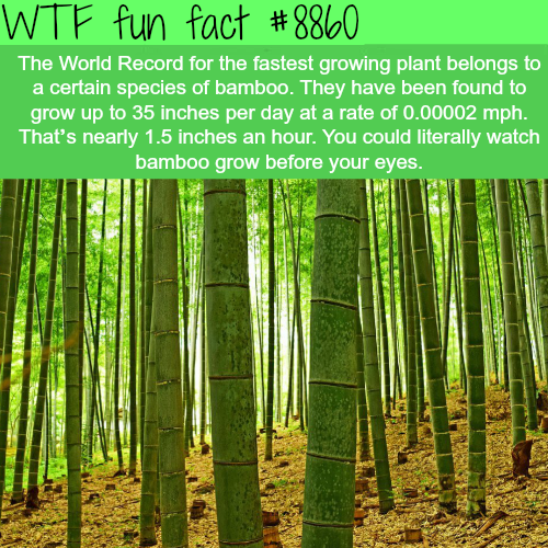 The World's Fastest Growing Plants - WTF fun facts