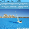 the worlds largest swimming pool wtf fun facts