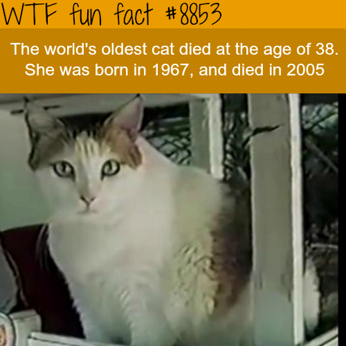 The world's oldest cat - WTF fun facts