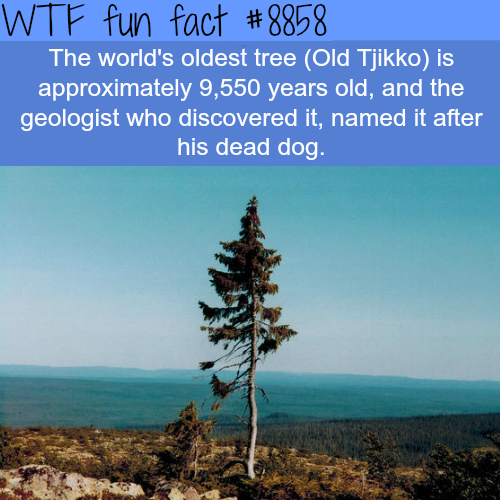 The World's Tree in the World - WTF fun facts