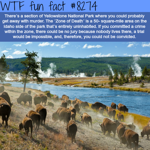 The Zone of Death - Yellow Stone National Park - WTF fun facts