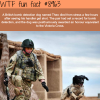 theo the dog wtf fun fact