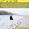these giant balls showed up at a siberian beach