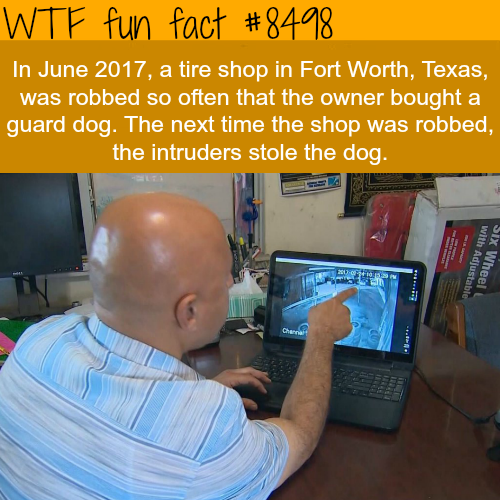 thieves stole a guard dog - WTF fun facts