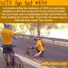 thirsty koala stops an australian cyclist
