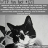 this cat got a medal wtf fun facts