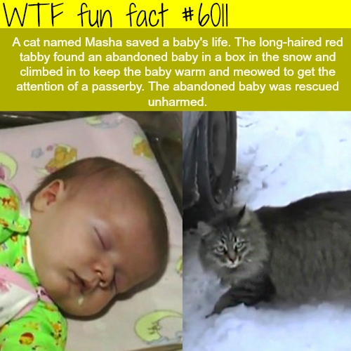 This cat saved an abandon baby in the snow -WTF fun facts