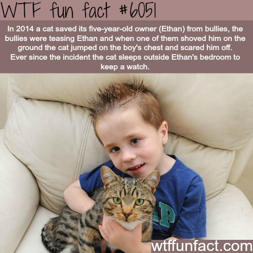 This cat saved it's owner life from bullies - WTF fun facts