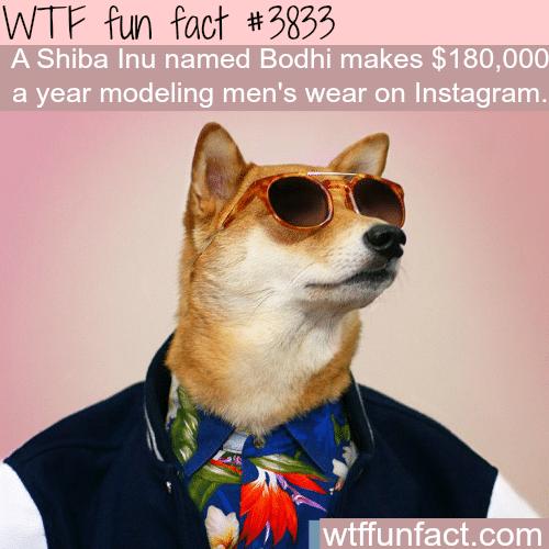 This dog make $180