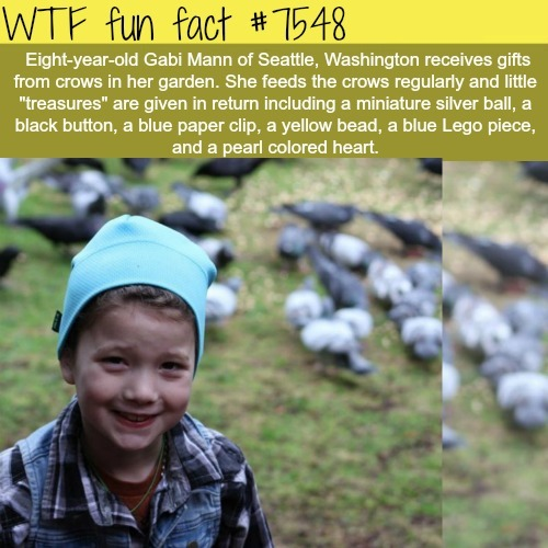This eight year old girl gets gifts from birds - WTF fun facts